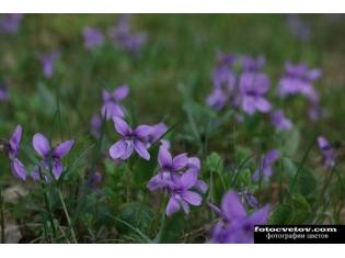 Ночные цветы и название 75