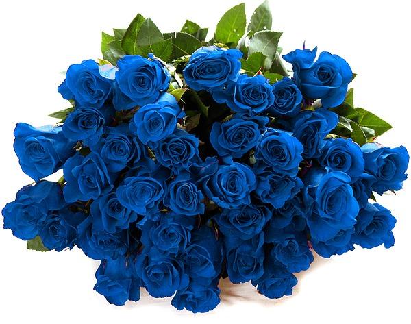Картинки синие мокасины - d92fb