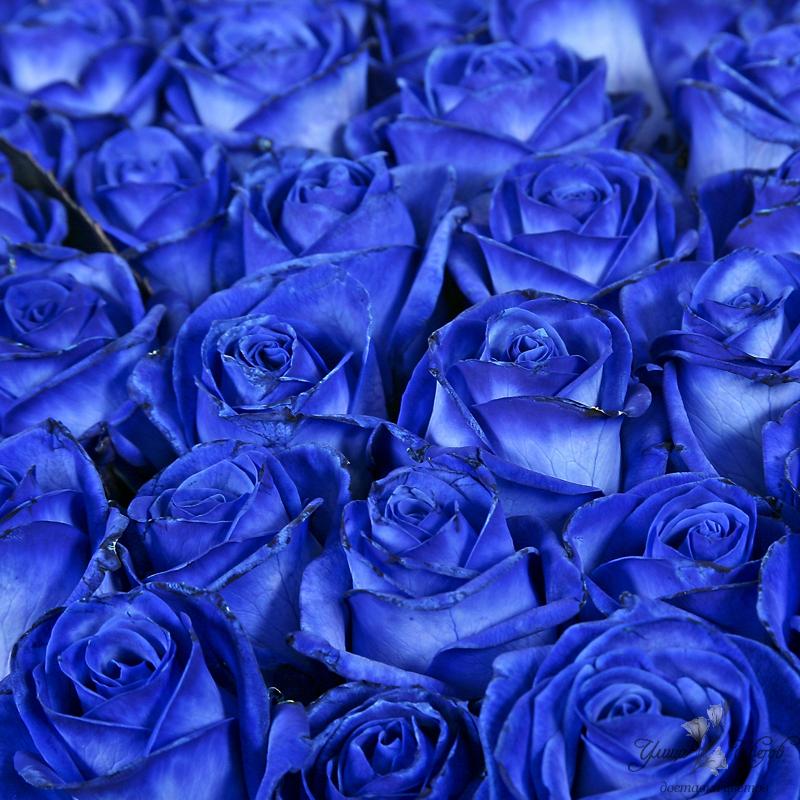 Картинки синие с белым - 5