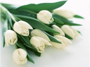 Картинки цветов тюльпаны