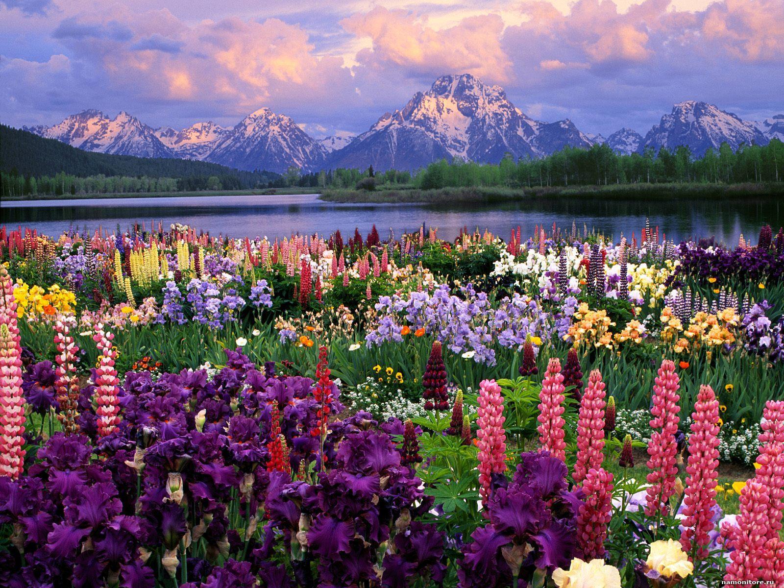 Горы цветы