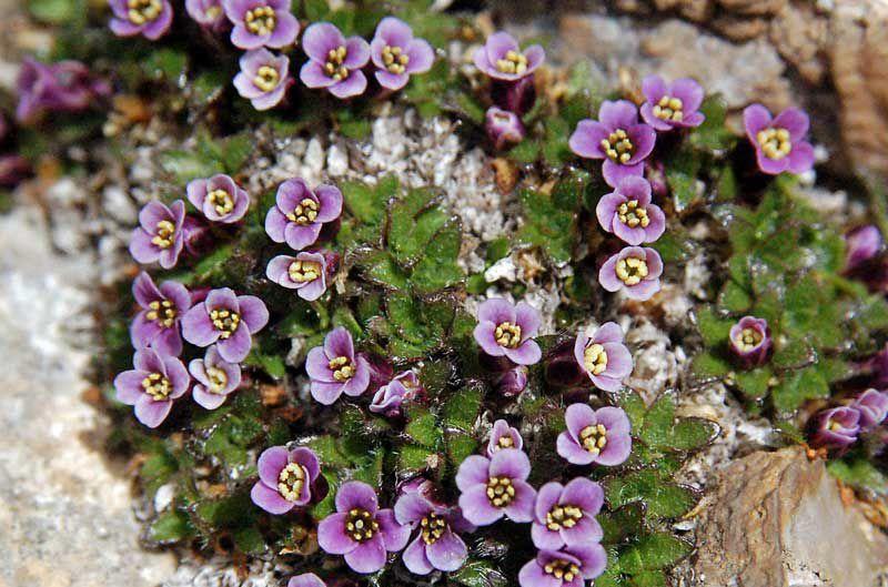 садовые цветы однолетники каталог