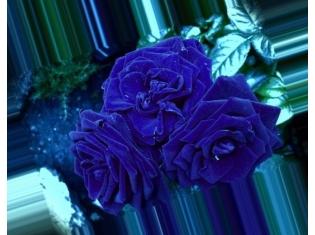 Картинки на аву цветы розы