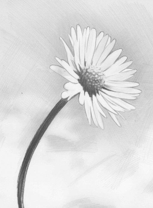 Цветы из фатина своими руками, мастер класс с фото и видео