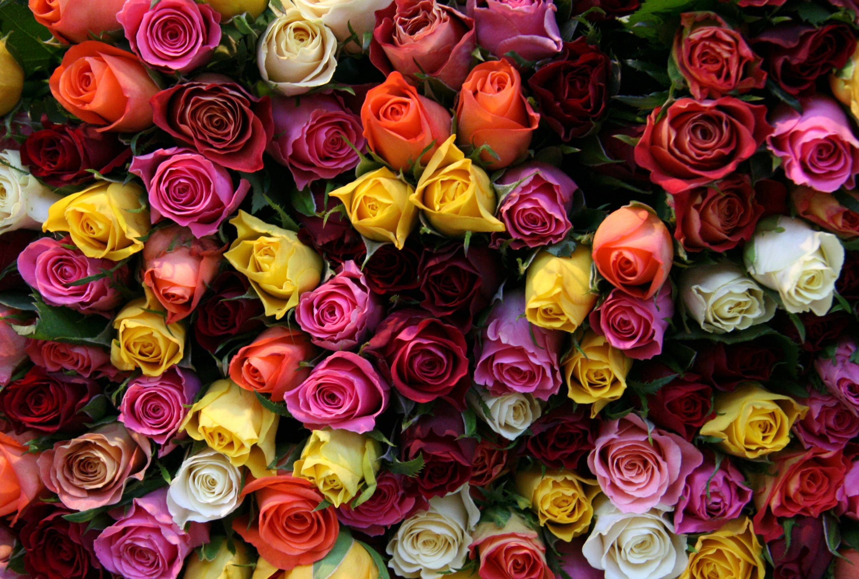 Лучшее красивые цветов