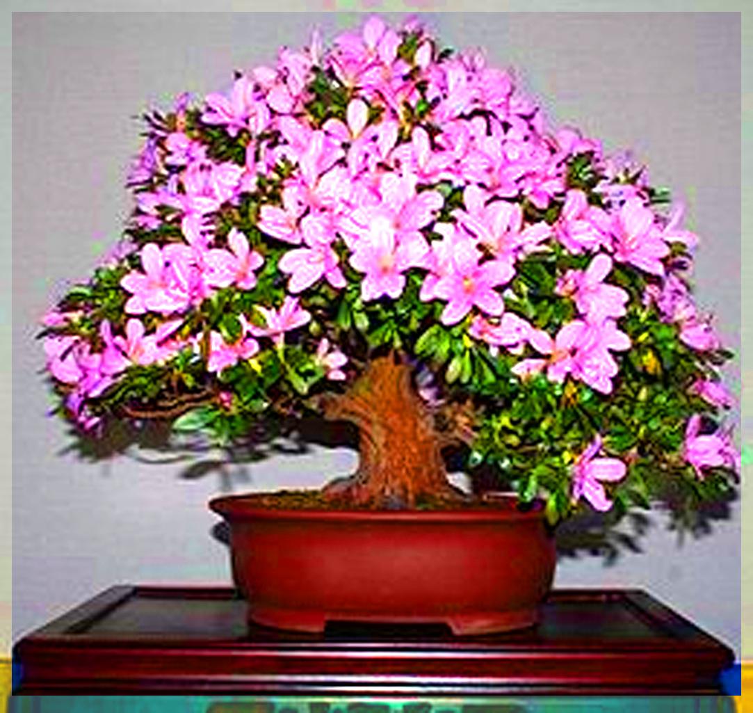 Что за цветок азалия и как ухаживать