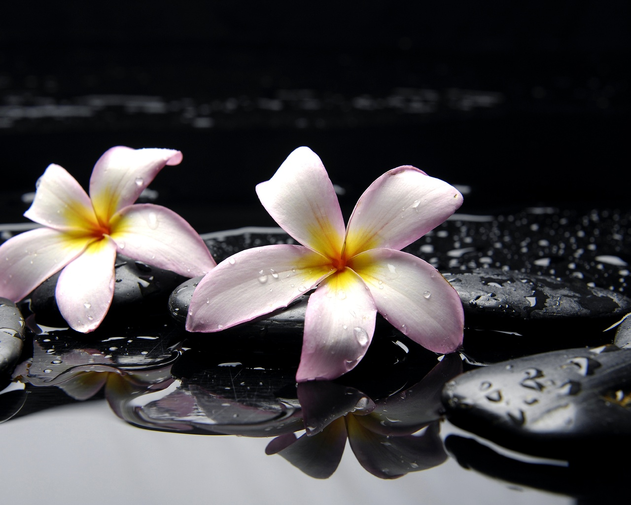 обои на раб стол цветы вода № 635540 загрузить