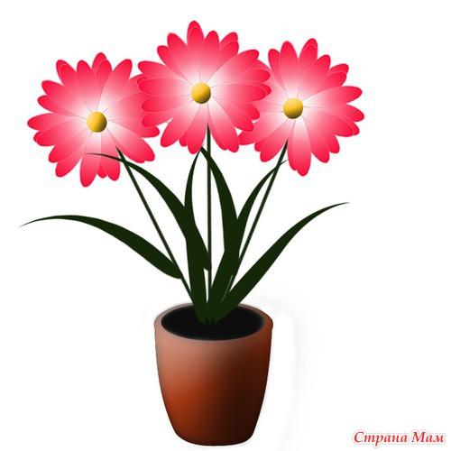 Цветок василек картинка