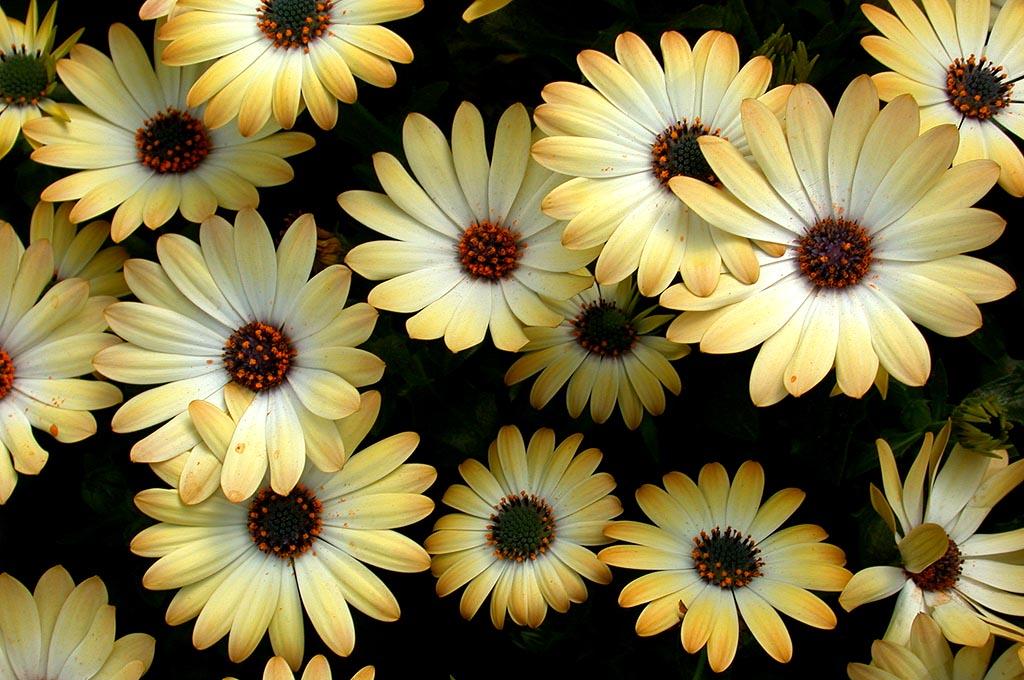 Фото цветов в хорошем качестве разрешение