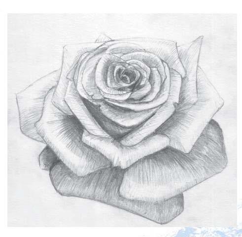 Эскизы тату роза с кружевом и