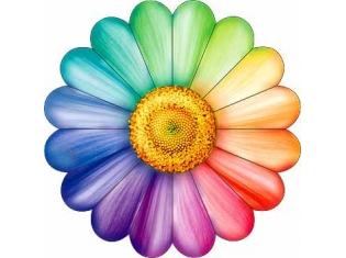 цветок картинка ромашка