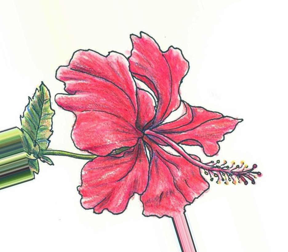 Картинки цветные карандаши - 91