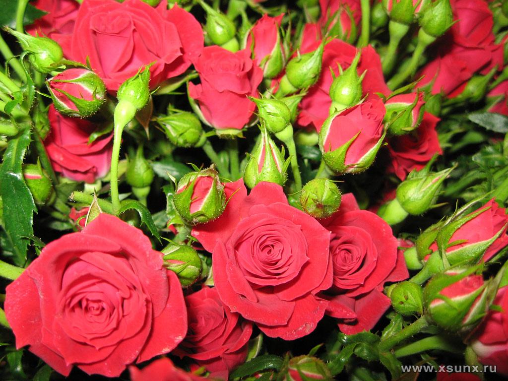 Букет из 11 красных роз  dostavkaflowers