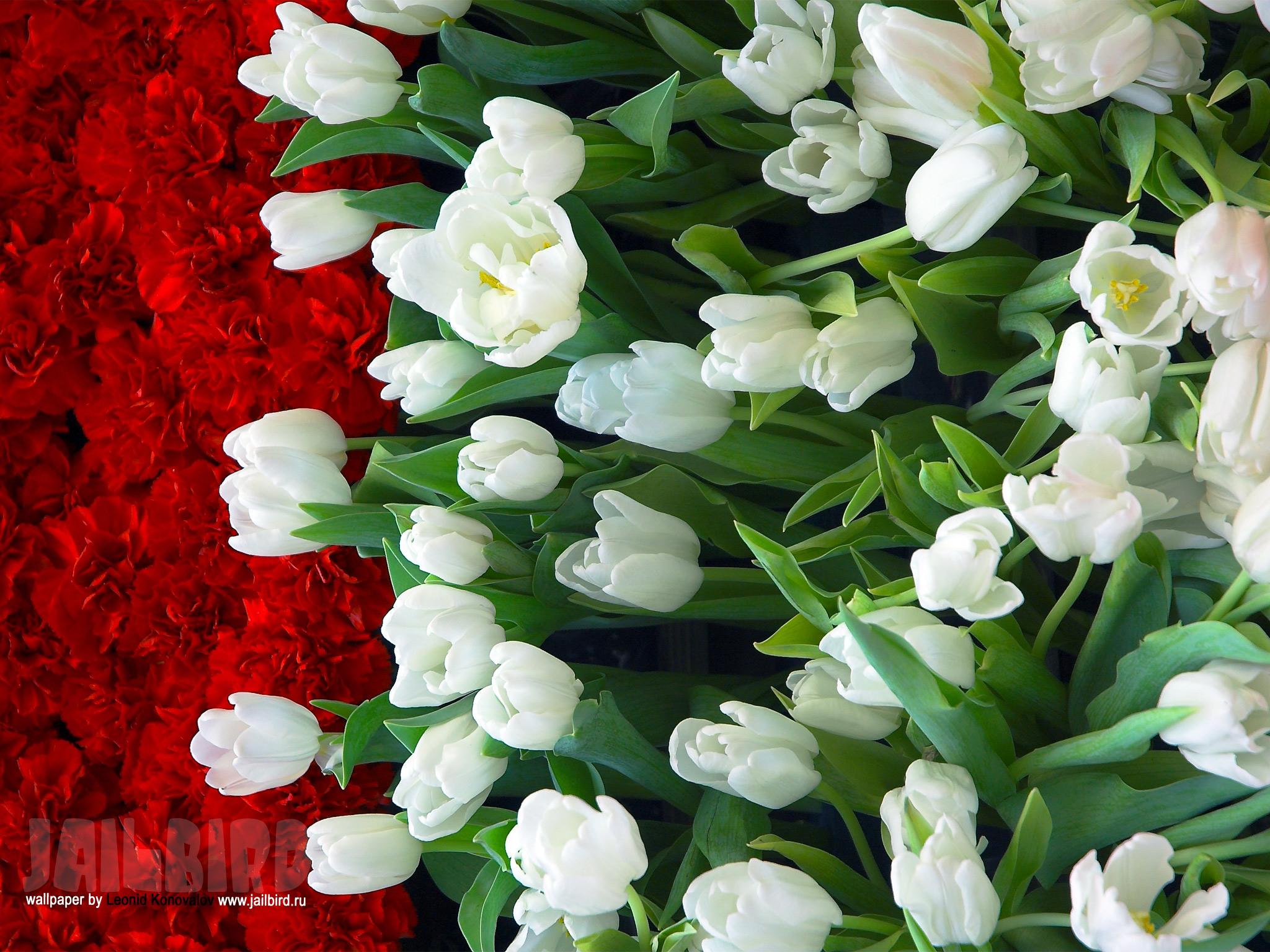 Букеты цветов картинки очень красивые 8