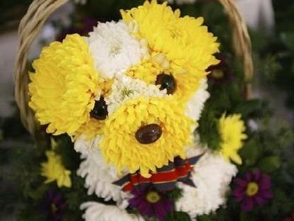 http://dreempics.com/img/picture/Apr/14/cac028a4e4ee0471735317f8367a7c5d/9.jpg