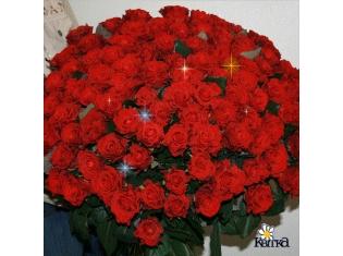 Красивые картинки с цветами скачать