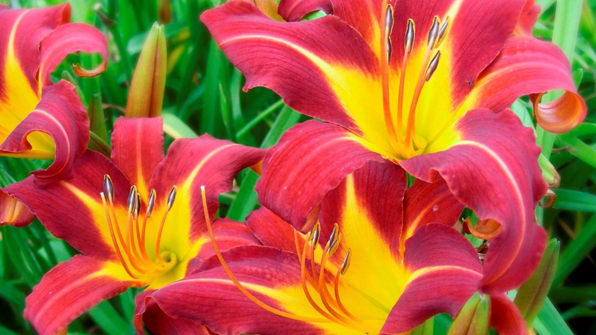 Роскошные цветы картинки.