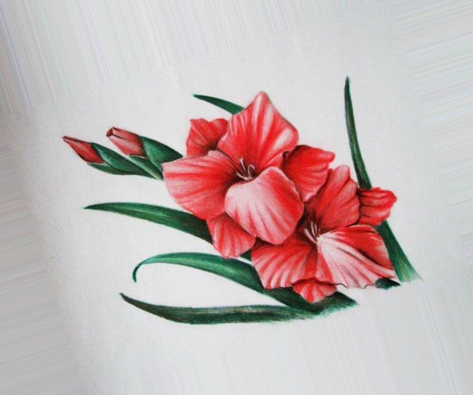 Картинки цветов нарисованные цветные