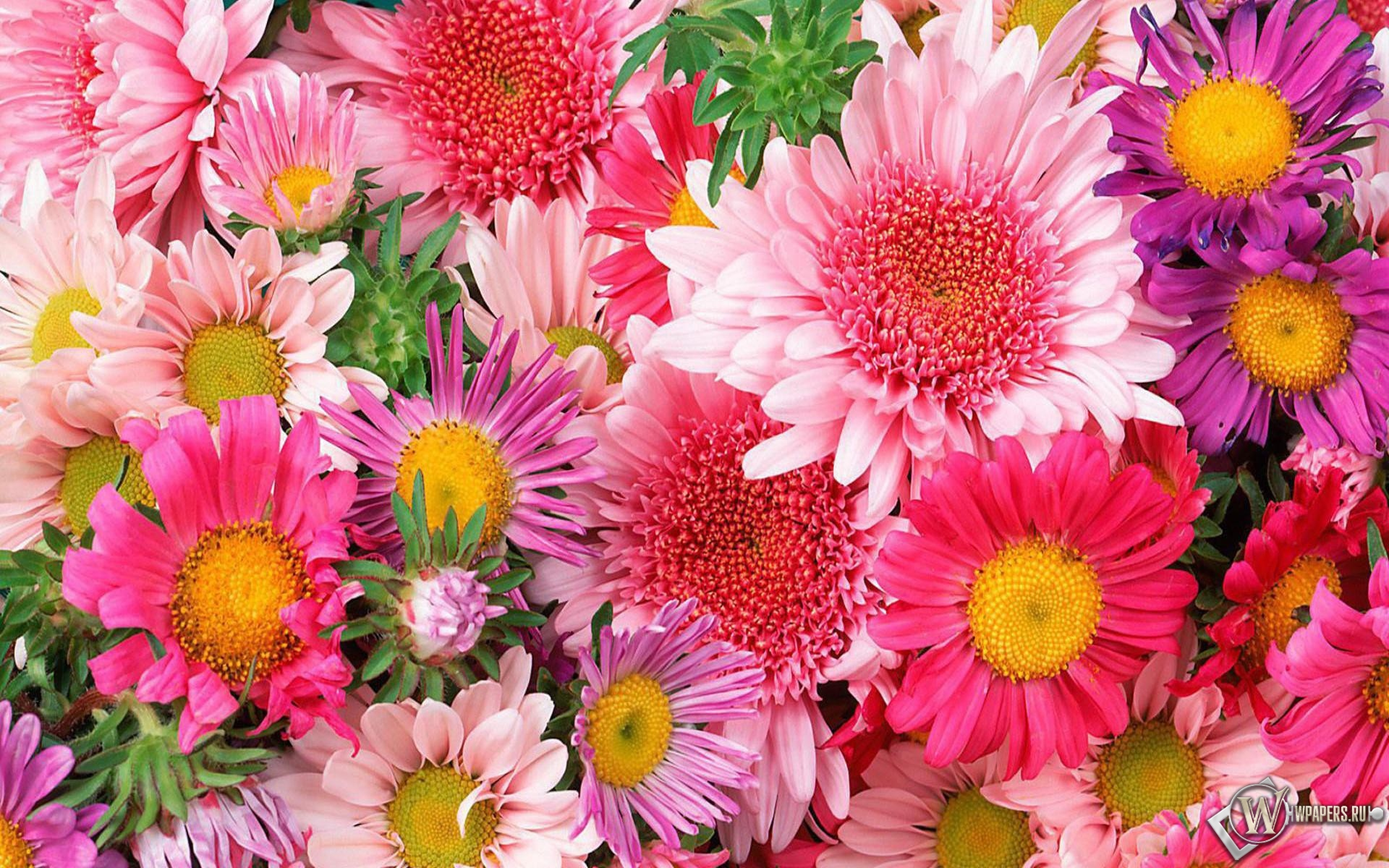 фото цветы скачать