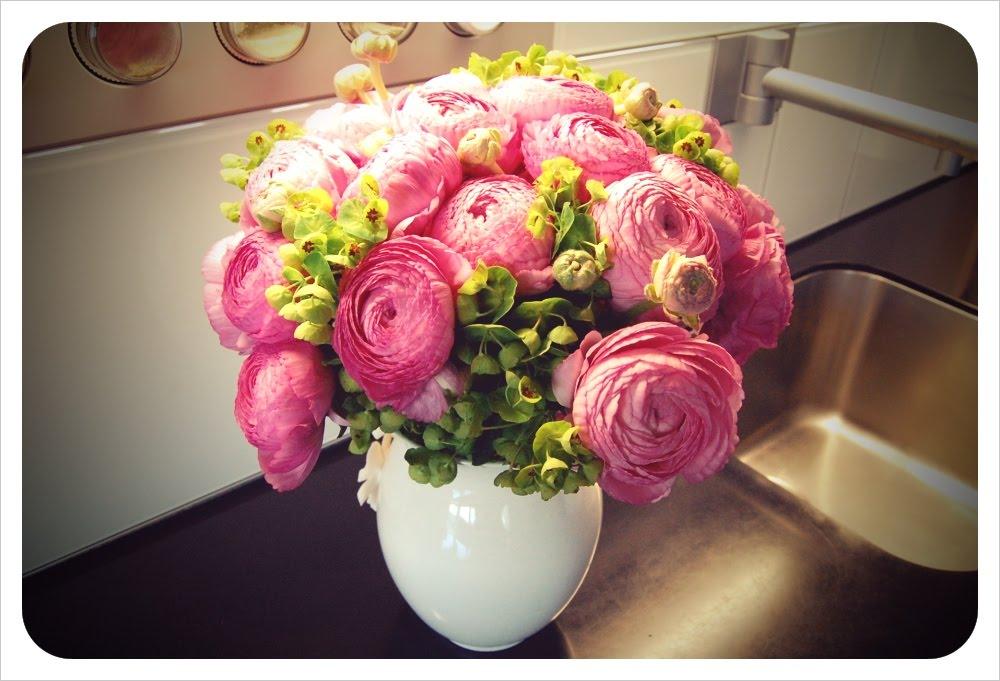 Фото цветов ранункулюсы