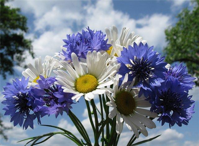 Картинки букет цветов самый красивый