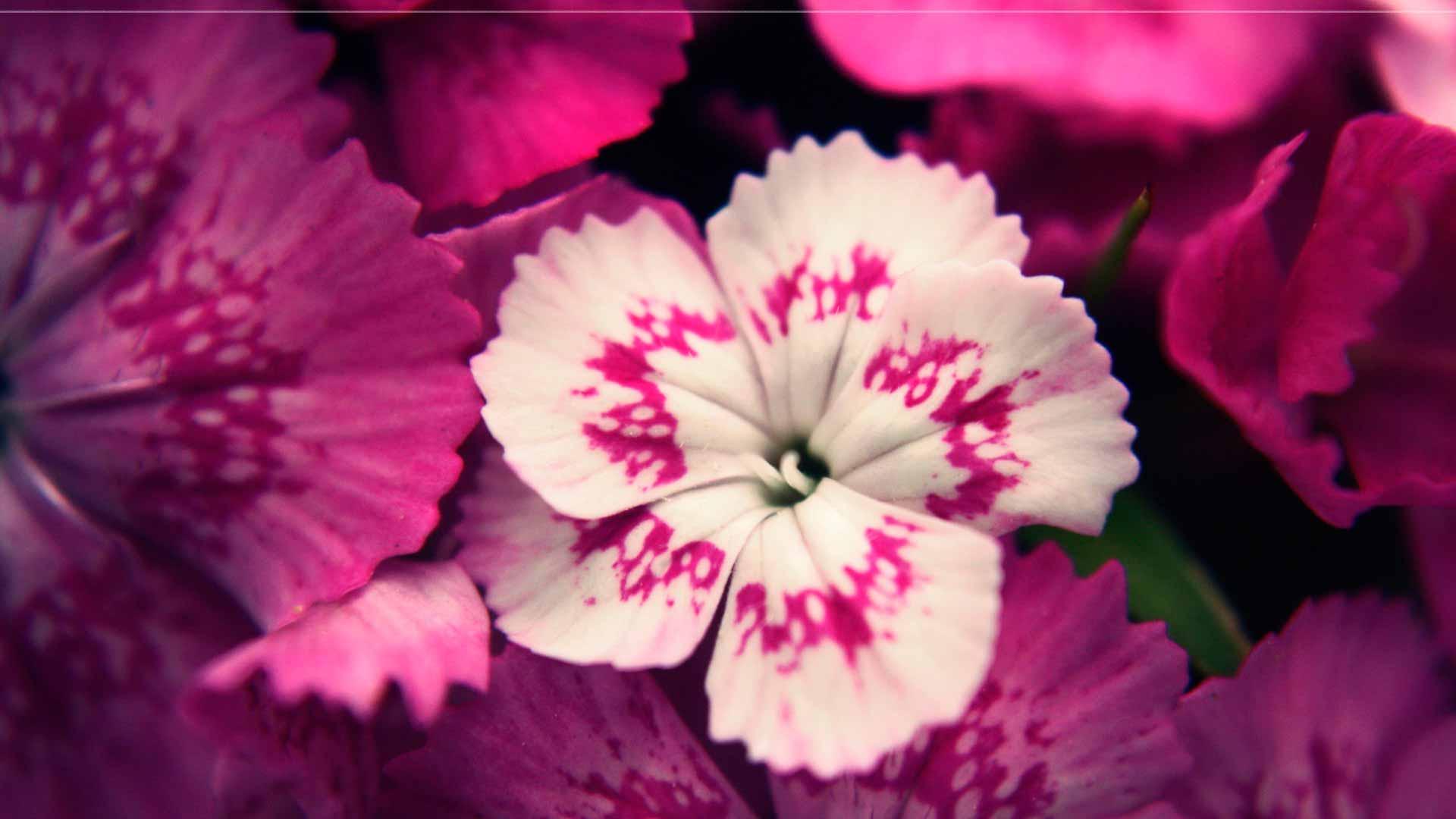 Фото на рабочий стол цветок