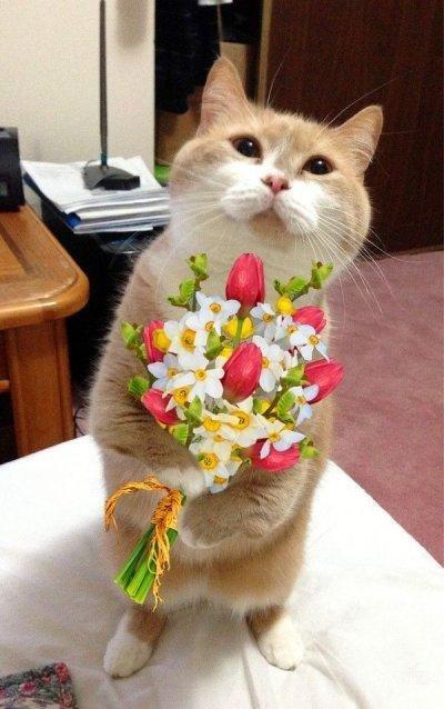 Открытка с котом и цветами 166