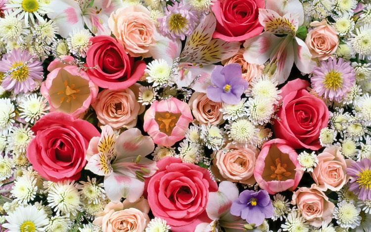 Много цветов картинка
