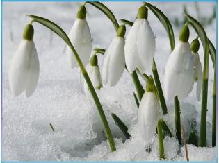 http://dreempics.com/img/picture/Apr/15/eebb40ac011a5b1fcea529663c964d9d/mini_2.jpg