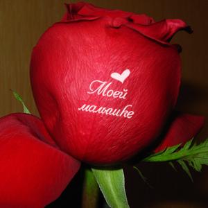 Любовь и цветы картинки