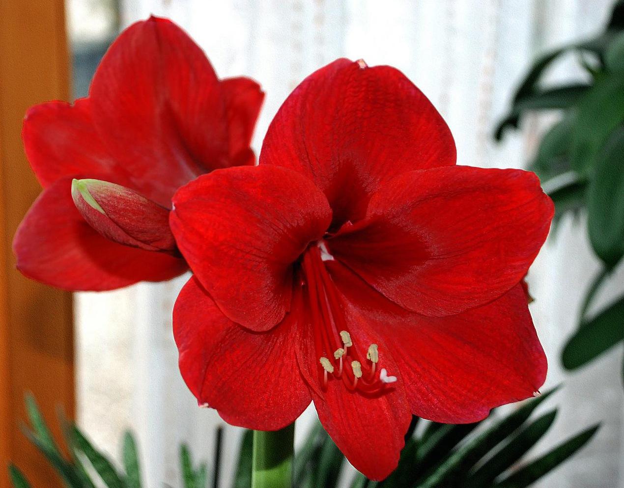 Красивые цветы с бумаги