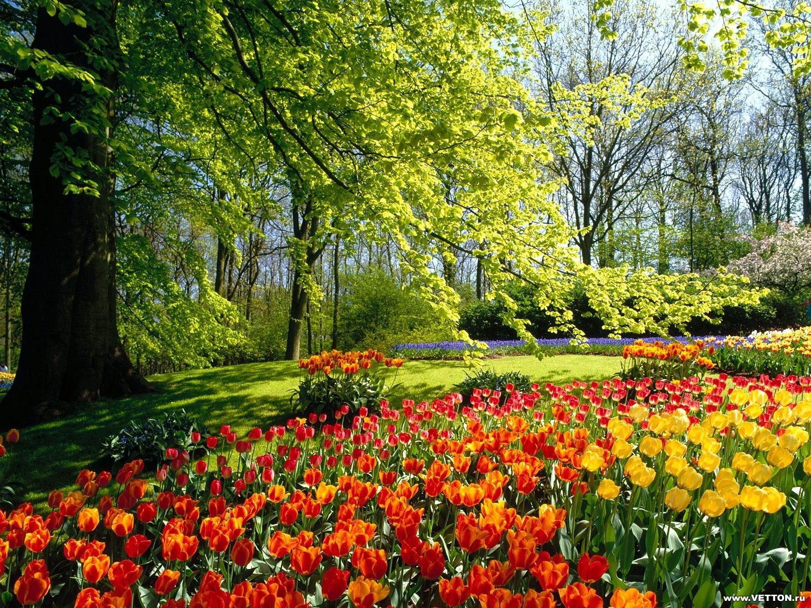 Скачать картинку цветы бесплатно на телефон 11