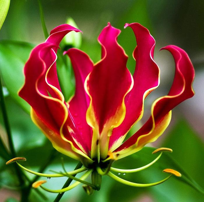 Картинки красивых и необычных цветов