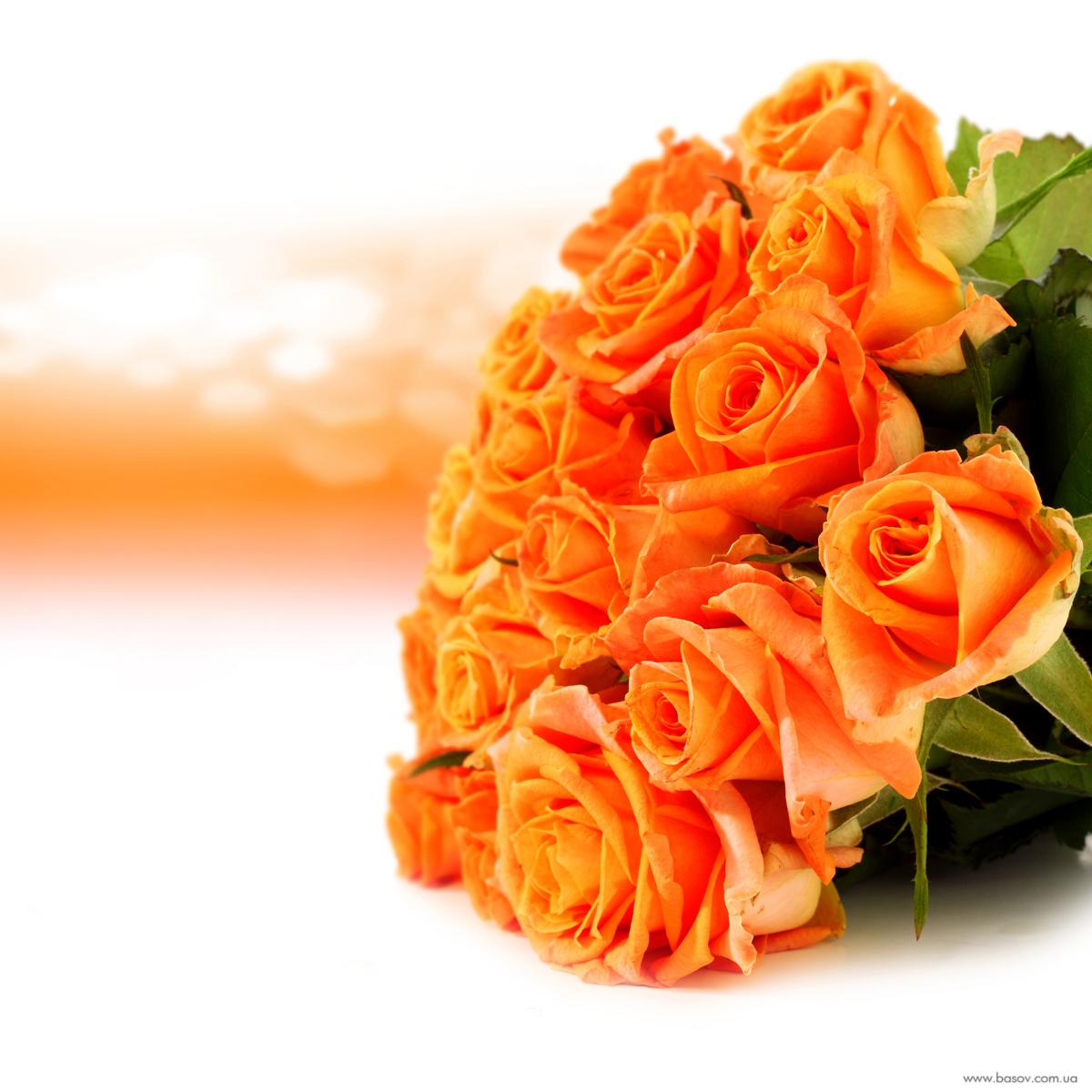 Фото самый красивый розы