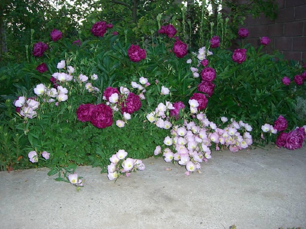 Цветы сибири  и названия