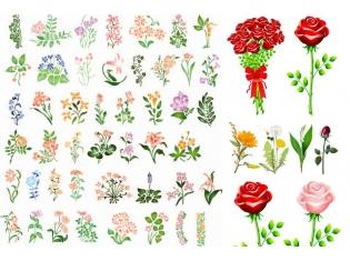 Все цветы мира названия и 87