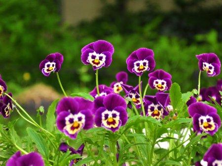 Картинки цветов самые красивые