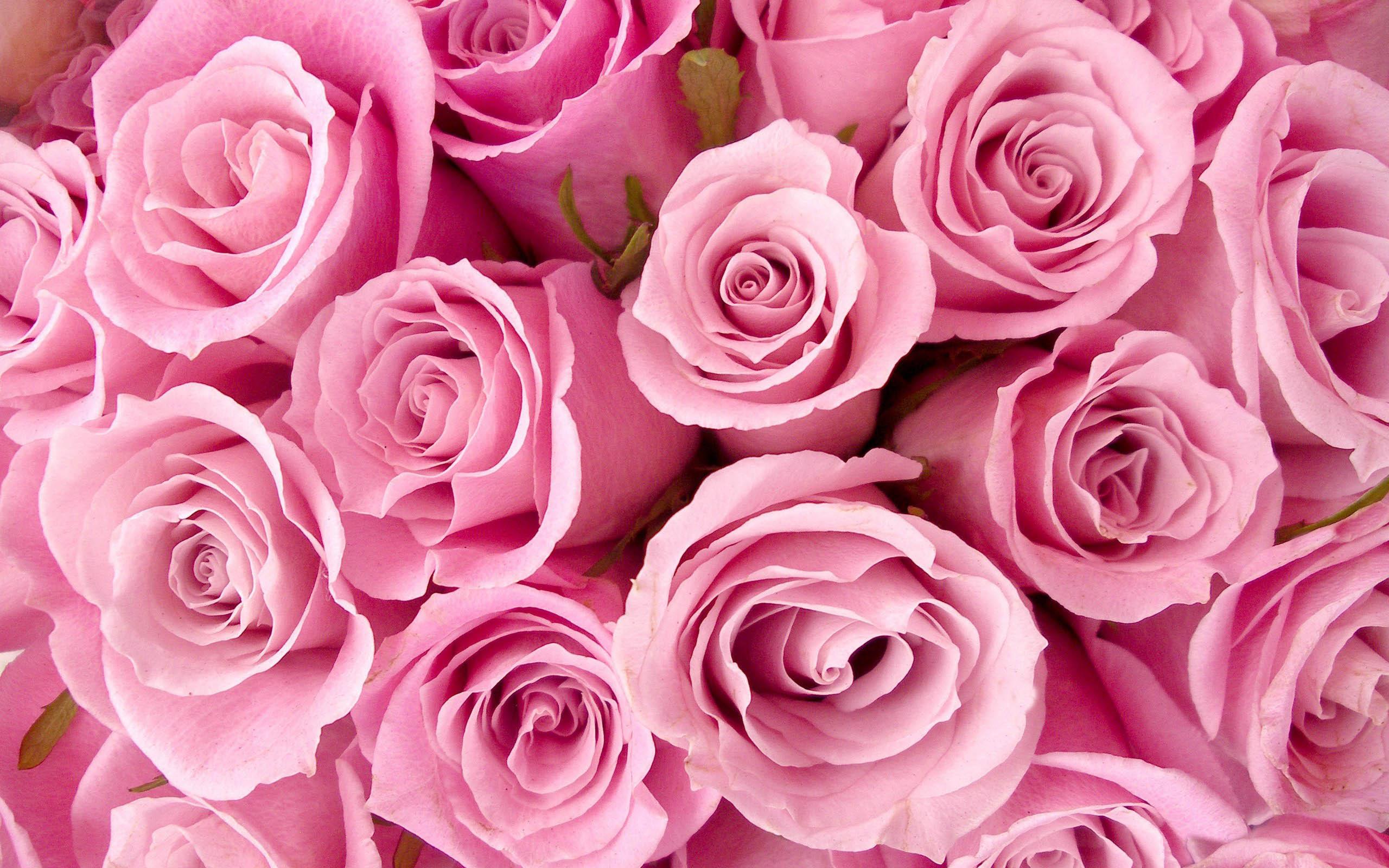 Цветы тема картинки