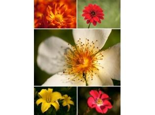 Фото живых цветов комнатных 43