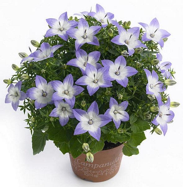 домашний цветы  и названия