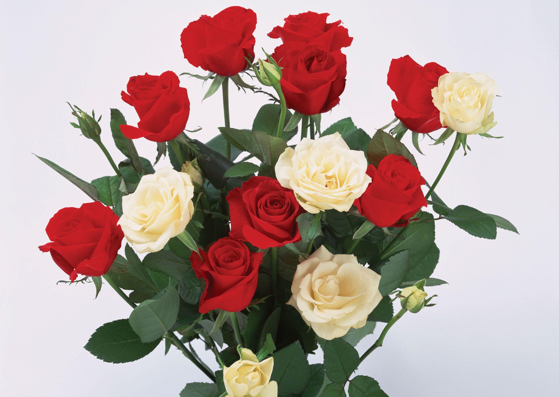 Розыкоторые я бы посадила еще раз  Энциклопедия роз