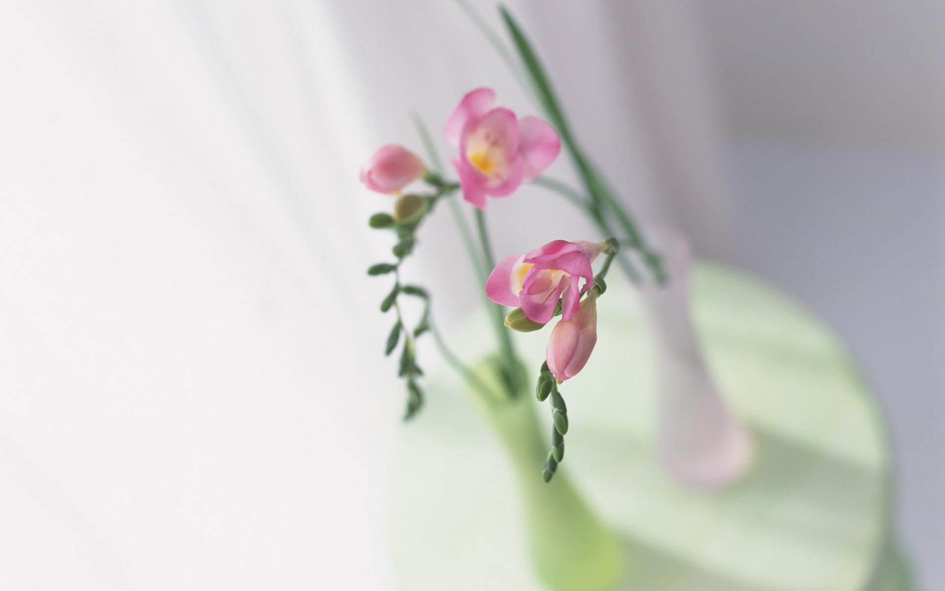 Цветы и нежность фото картинки