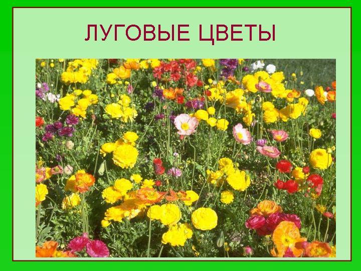 цветы  и названия