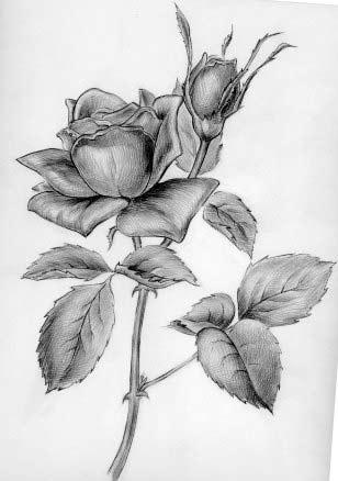 рисованные карандашом картинки