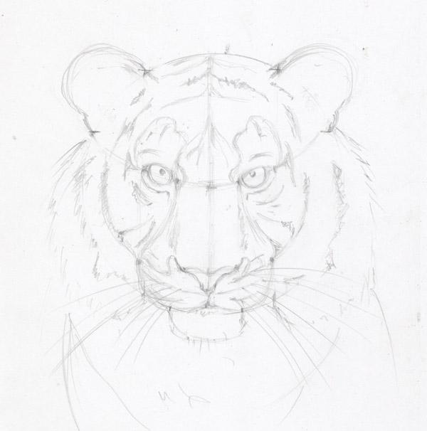 Картинки нарисованный тигр карандашом поэтапно 8