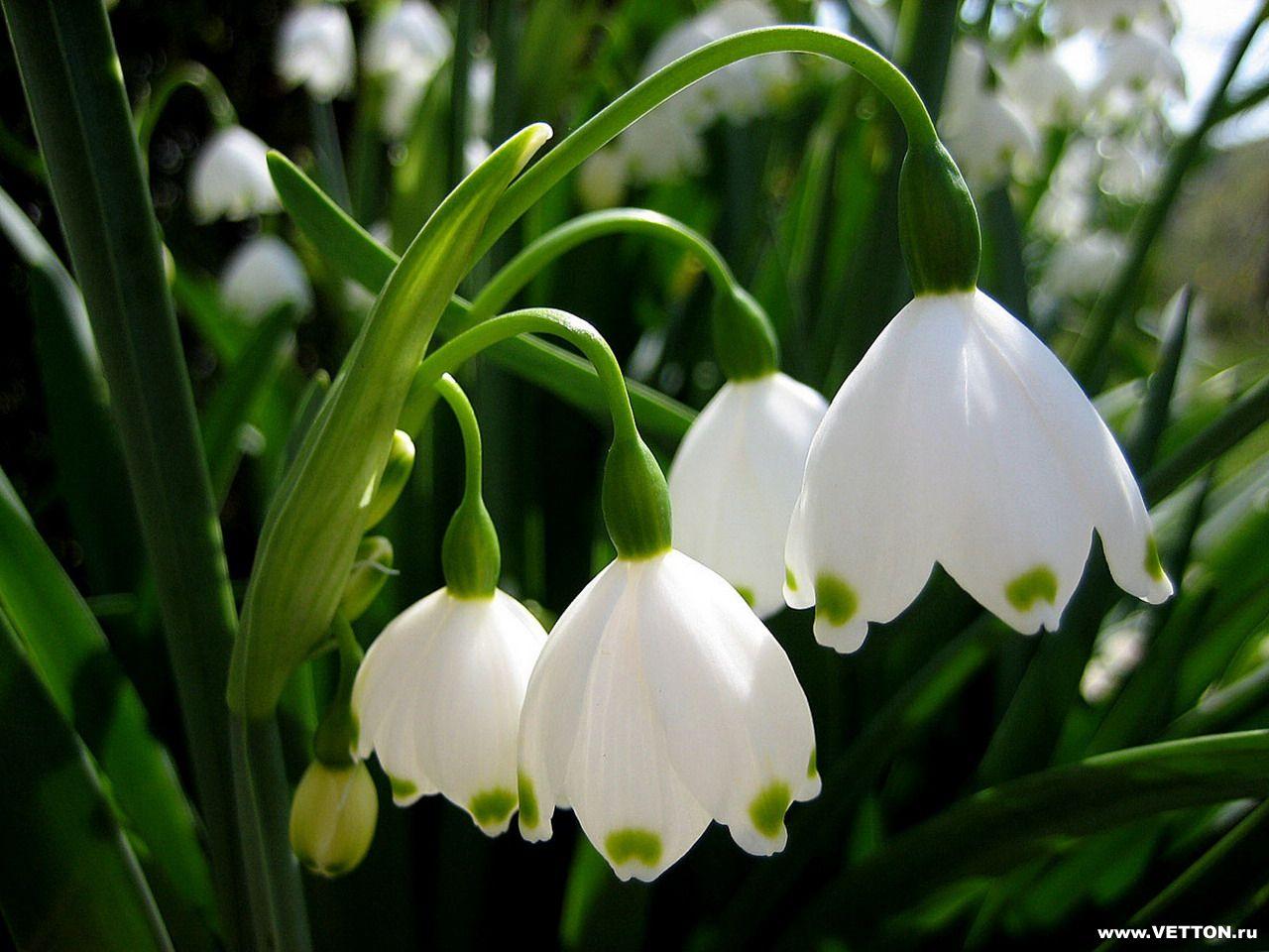 скачать картинки цветы: