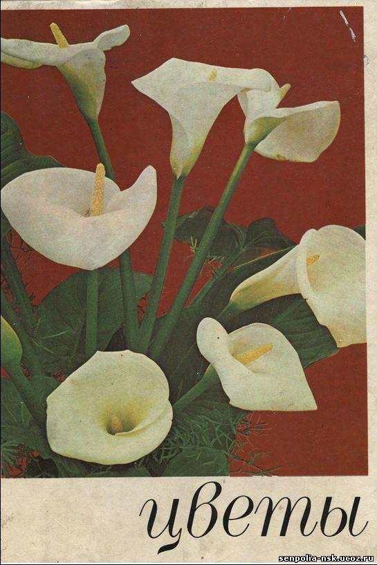 Цветы цветущие  и названия