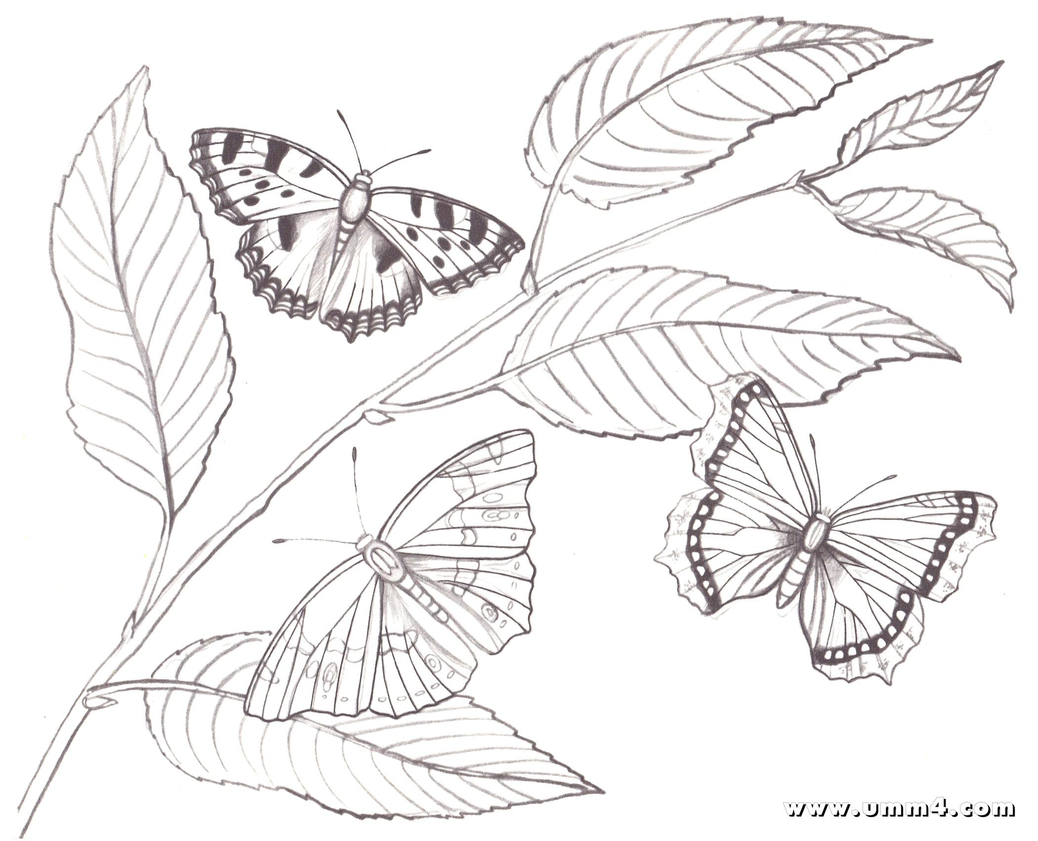 Раскраски бабочки и цветы распечатать