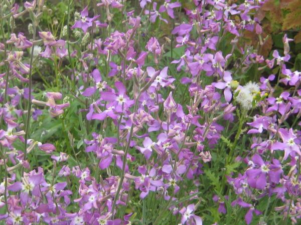 после цветы которые пазнут ночью индометациновые суппозитории следует