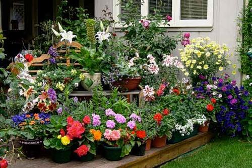 Цветов садовых все какие есть